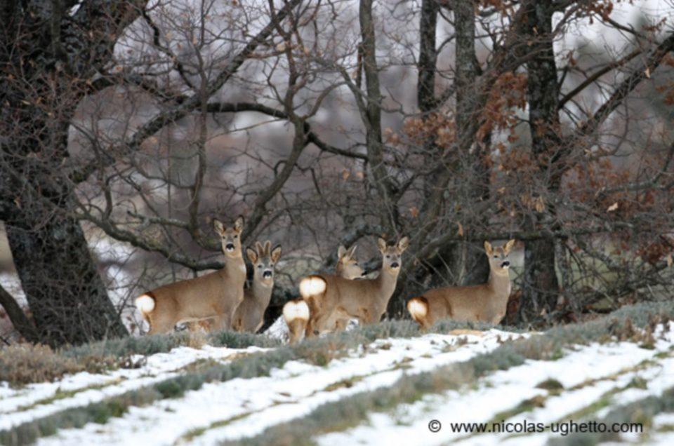 Approches photos de la faune du Ventoux